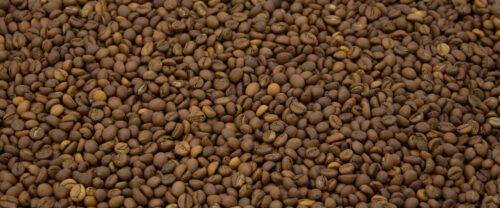 Indien Cherry Robusta Kaffeebohnen