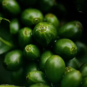 Kaffeeseminar grüne Kirsche