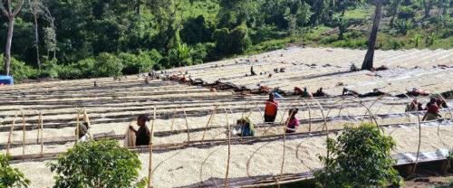 Trockenterrasse für Kaffee in Äthiopien